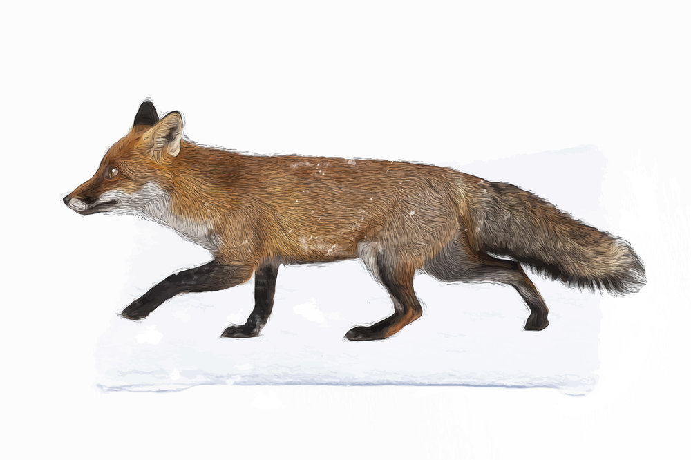 S-website-portfolio-fawn-fox-02.jpg