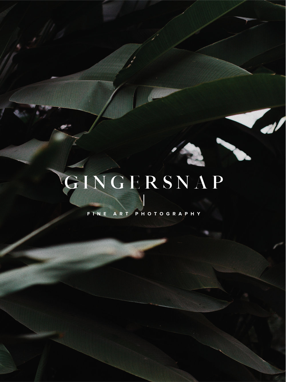 gingersnap-photography-swell-yyc-calgary-graphic-design