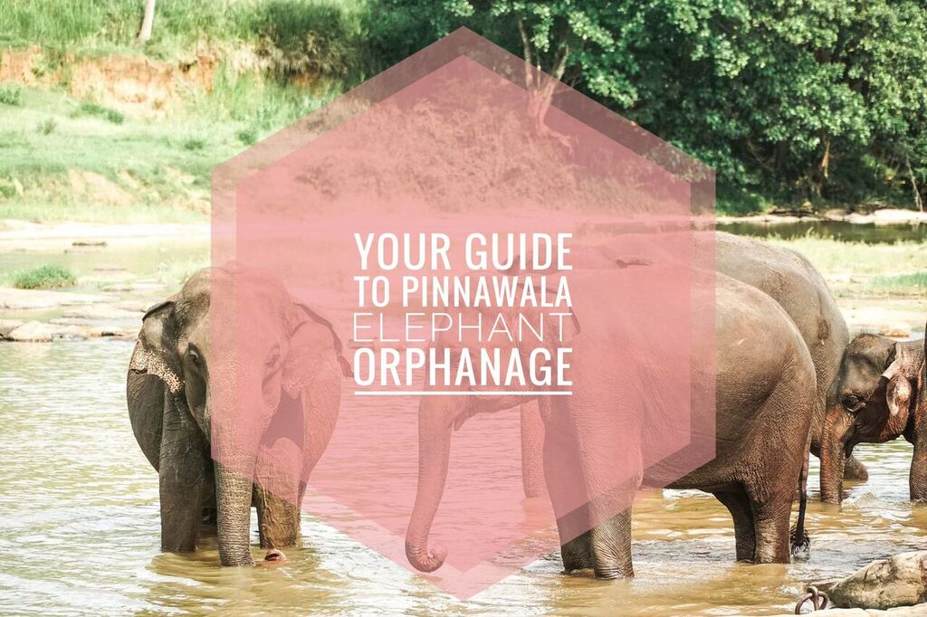 Pinnawala Elephant Orphanage — Seek See Travel