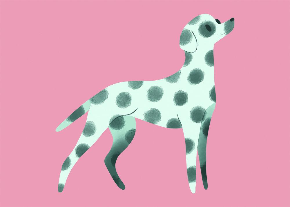 Dalmation pink 72dpi.jpg