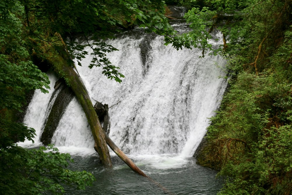 Silver Falls - Trail of 10 falls hike