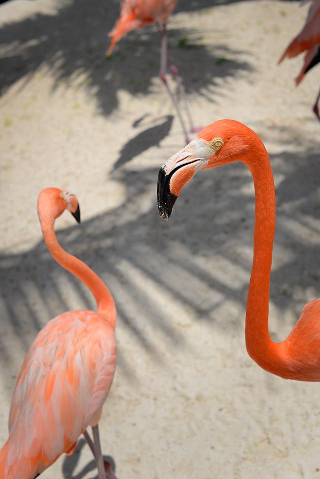 Aruba Renaissance-06.jpg