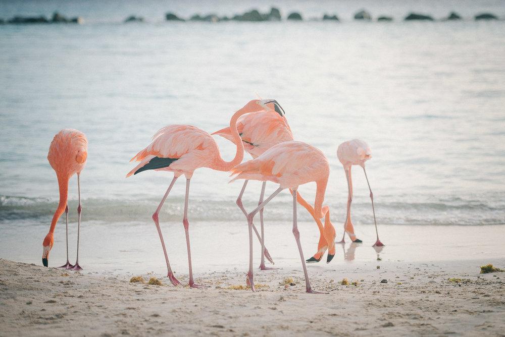 Aruba Renaissance-07.jpg