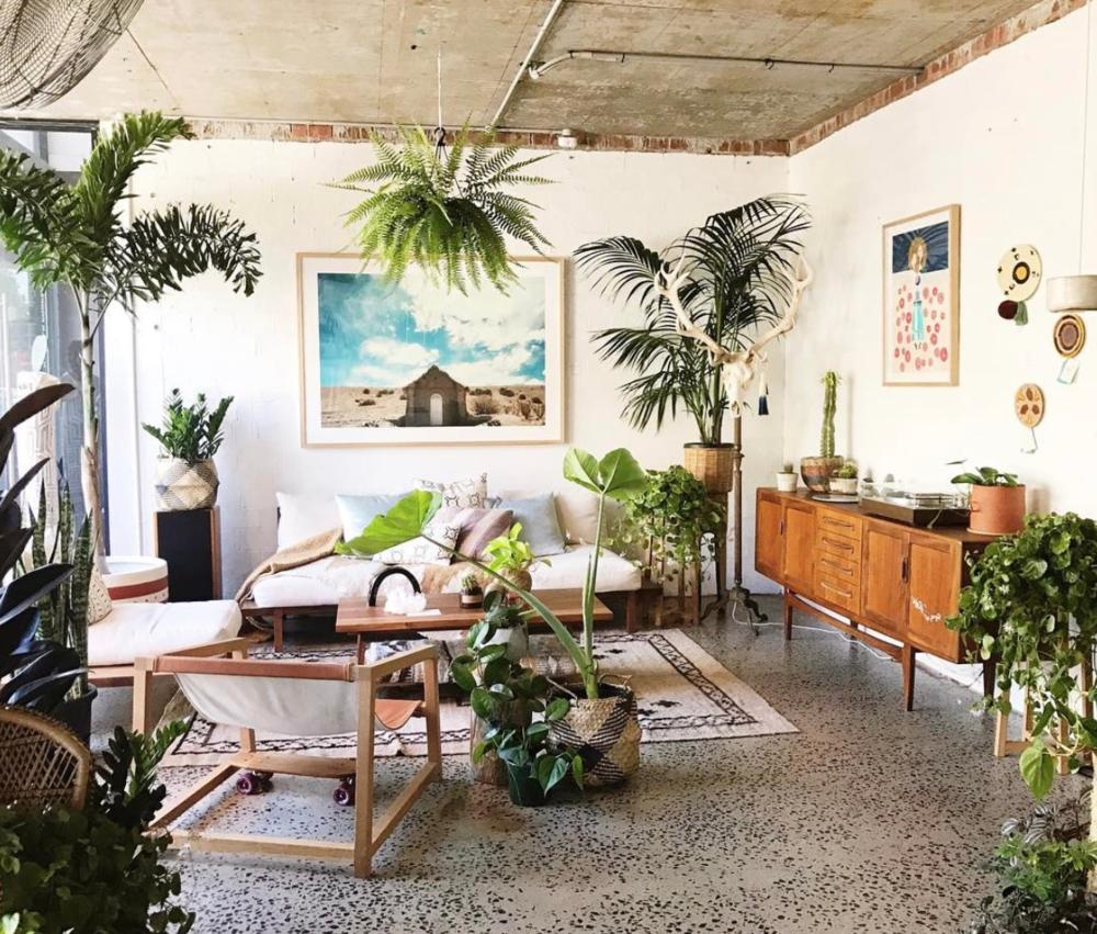 Indoor Greens in Sydney