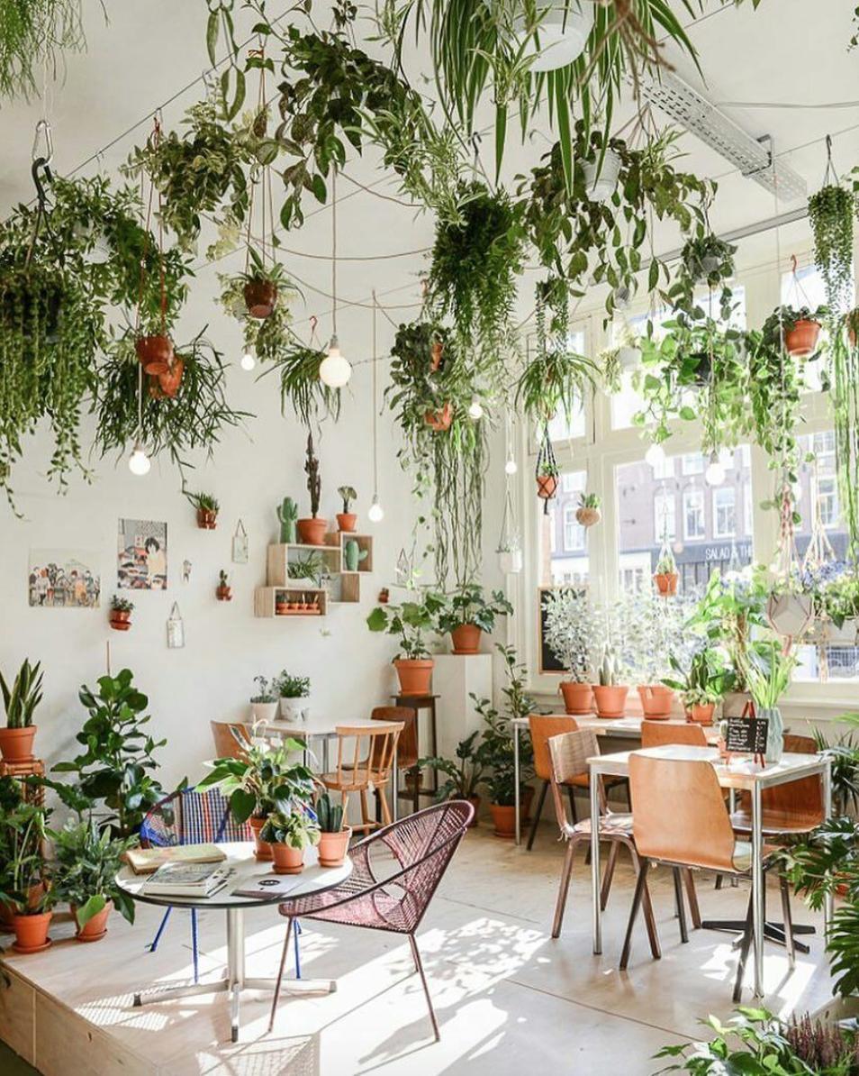 Urban Jungle in Amsterdam