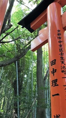 The peaceful gates of the Fushimi Inari Shrine in Kyoto, Japan
