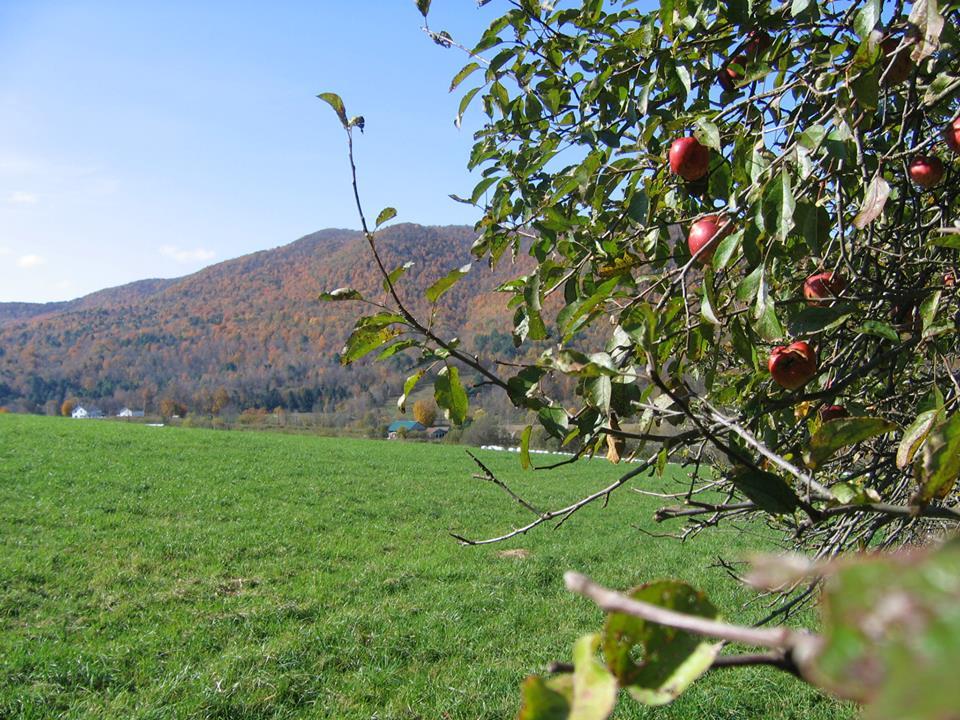 Farm_Pic_02.jpg