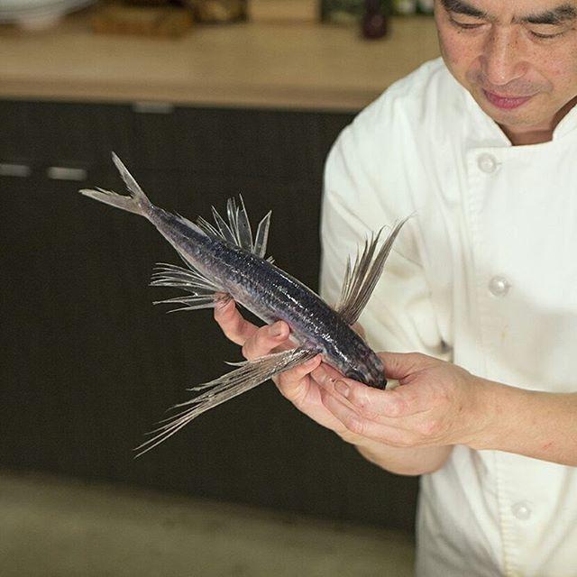 Chef Yoshi being dorky with flying fish and a little sneak peek at one of our current omakase dishes! ・ ・ ・ #sushi #sashimi #flyingfish #dc #downtowndc #freshfish #omakase #otsukuri #foodie #japanese #japanesefood #japanesefoodlover #fish