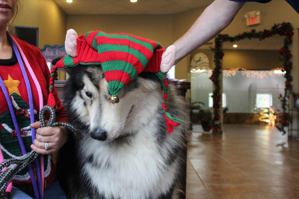 Pet Nation Lodge Dog Rug