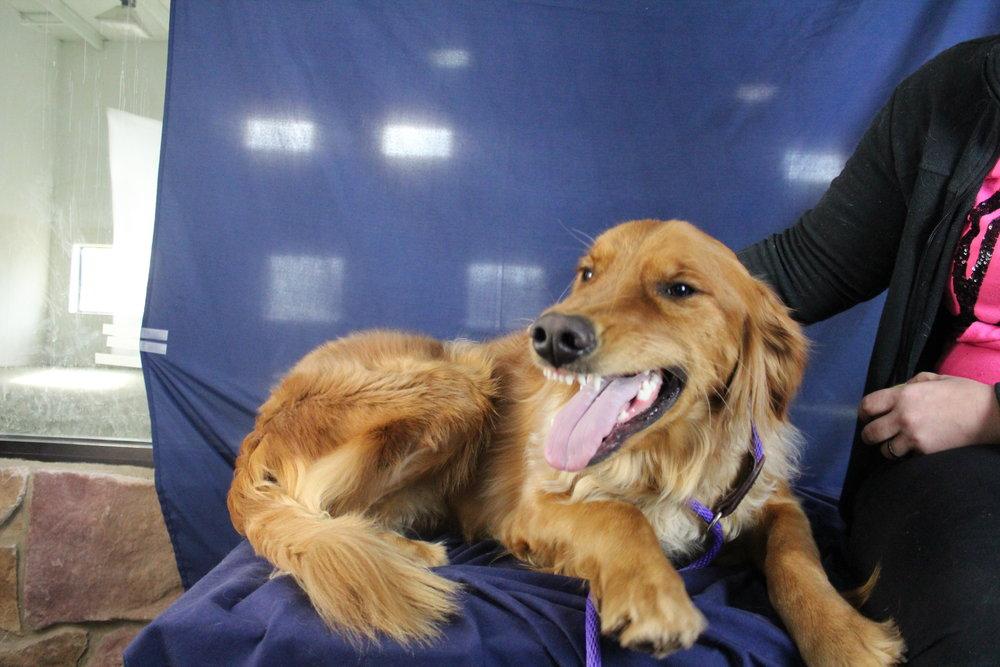 Pet Nation Lodge Daycare Dog Kobe 4