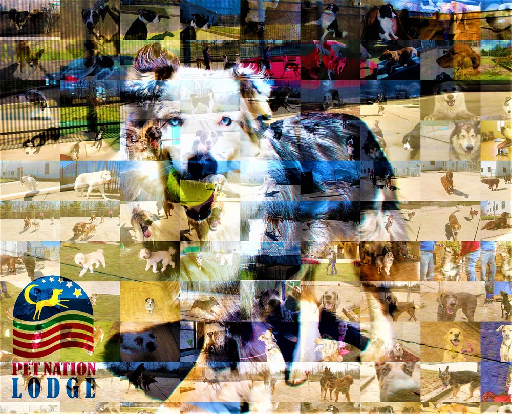 Pet Nation Lodge Pet Services Southwestern Ohio