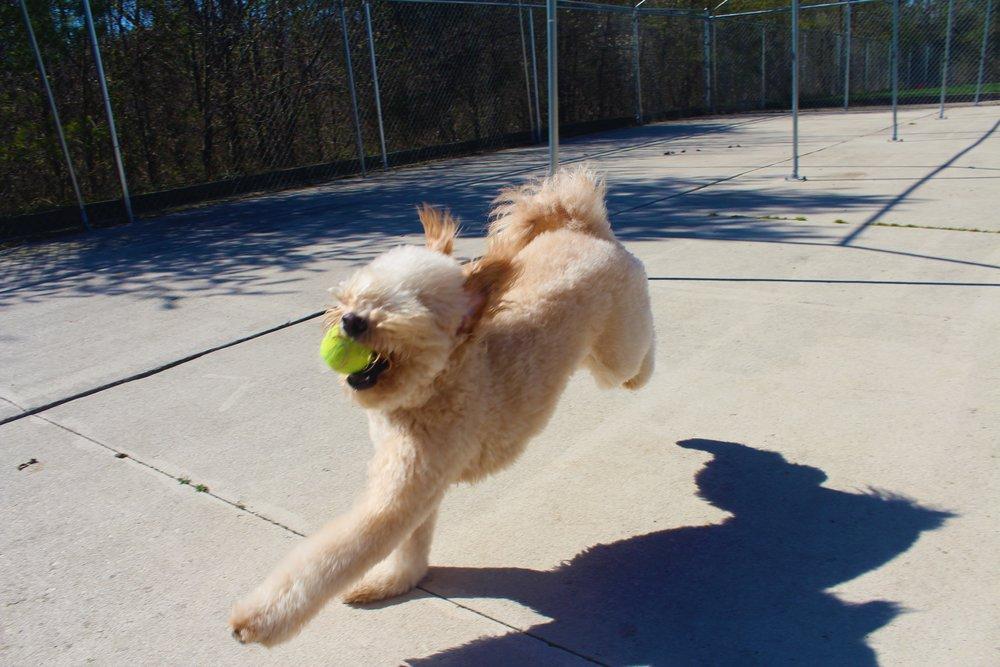 Pet Nation Lodge Dog Ziggy Puffball