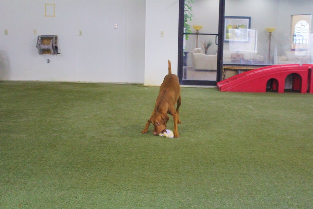 Pet Nation Lodge Daycare Dog Kash 6