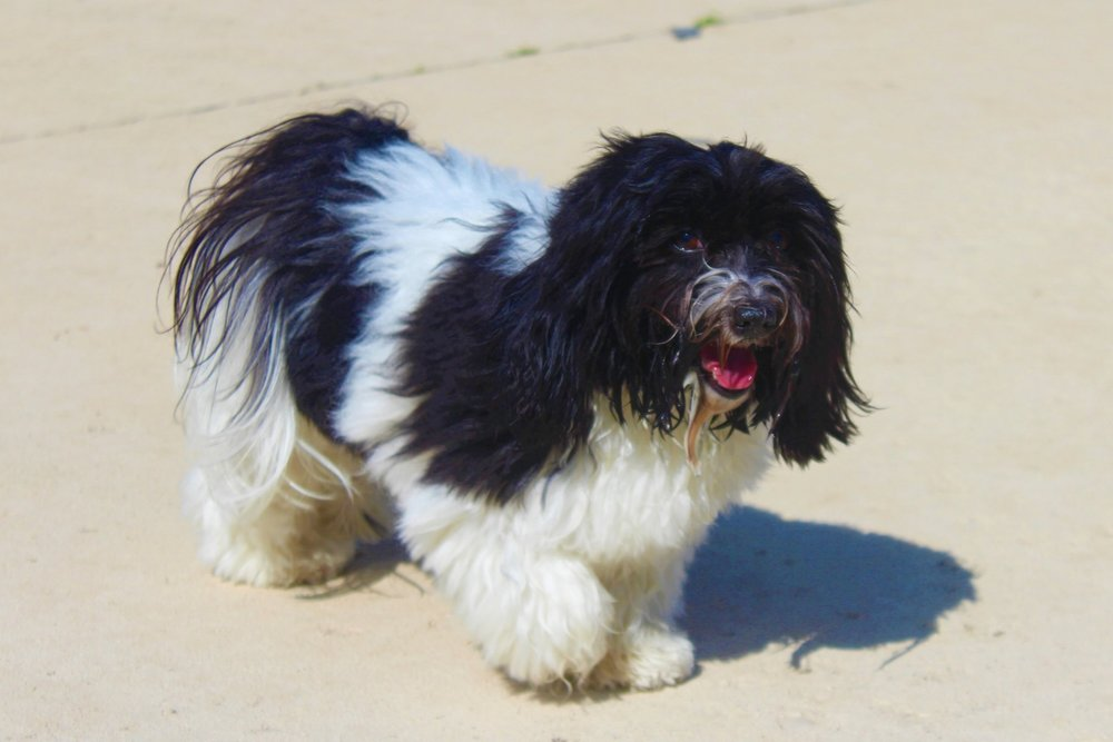 Pet Nation Lodge Dog Abby
