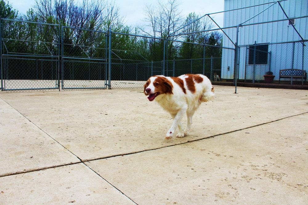 Pet Nation Lodge Daycare Dog Ruby 6