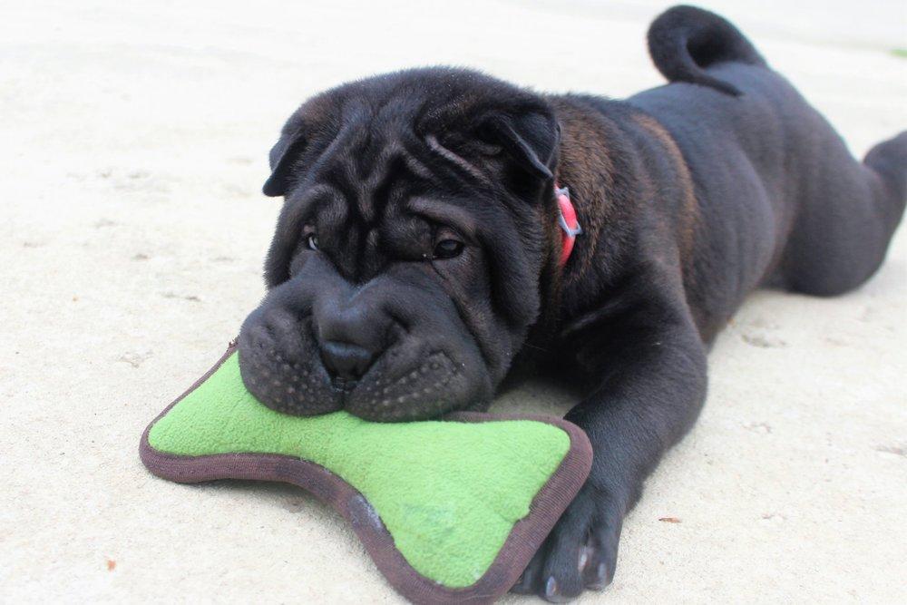 Pet Nation Lodge Dog Kimo