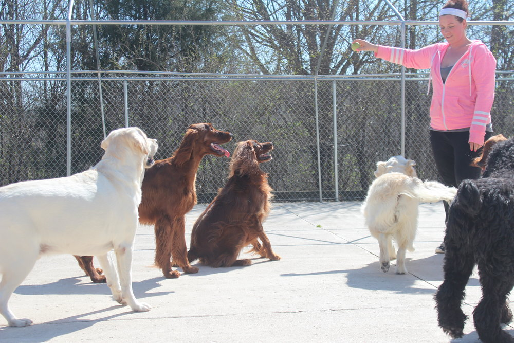 Dogs playing outside at Pet Nation Lodge