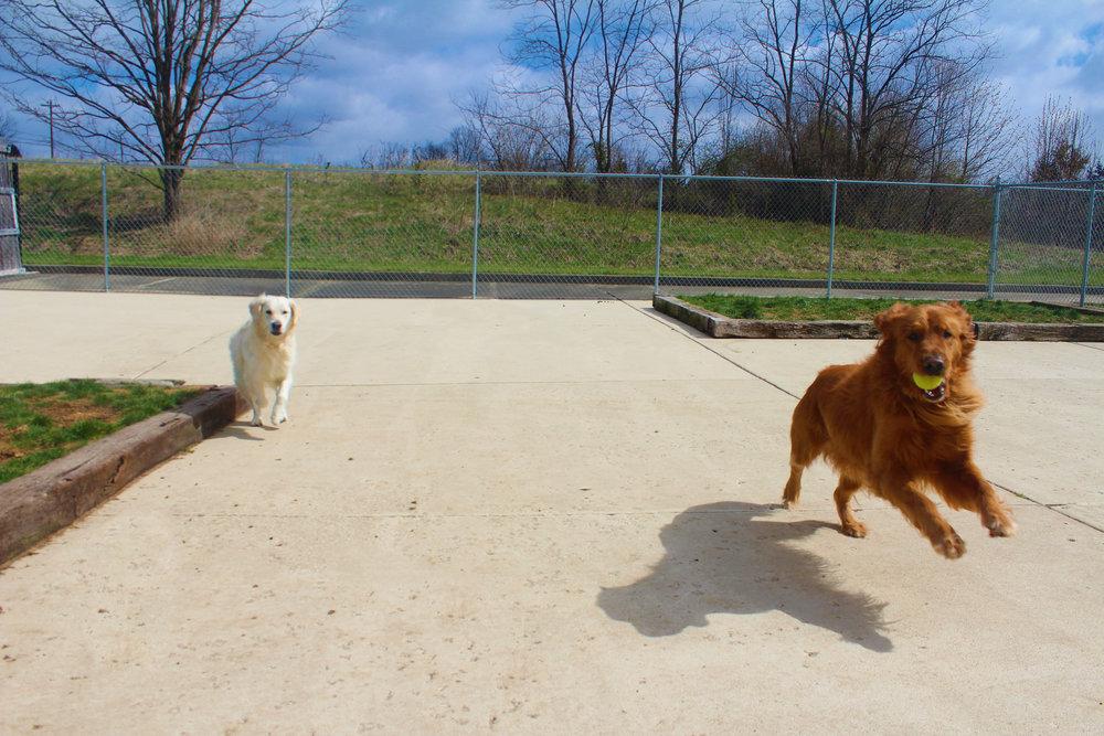 Pet Nation Lodge Daycare Dog Tucker Lee 3