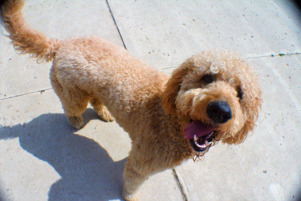 Pet Nation Lodge Dog Cincinnati