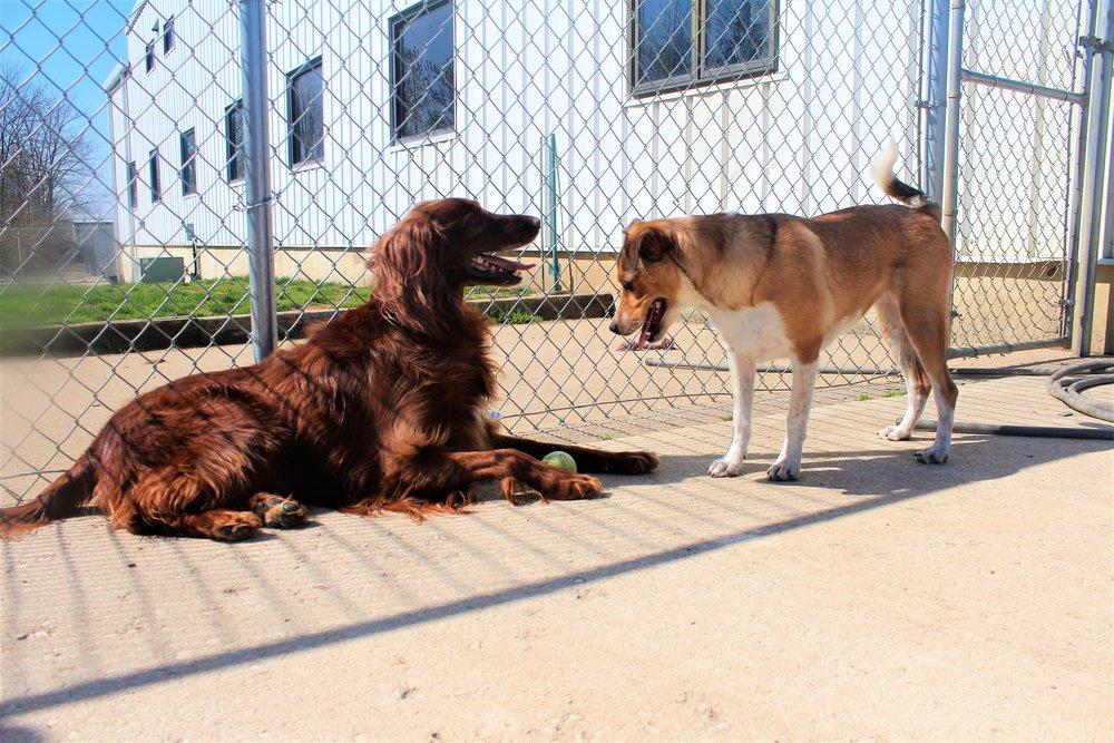 Pet Nation Lodge Boarding Dog Bailee 2