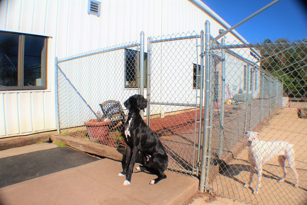 Pet Nation Lodge Boarding Dog Lou 6