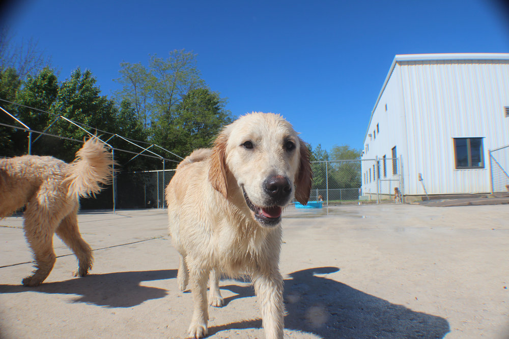 Pet Nation Lodge Daycare Dog Winnie 1