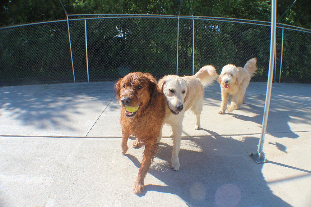 Pet Nation Lodge Boarding Dog Winnie 4