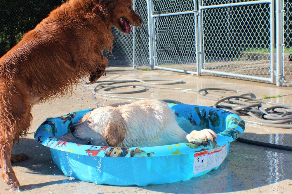 Pet Nation Lodge Daycare Dog Winnie 6