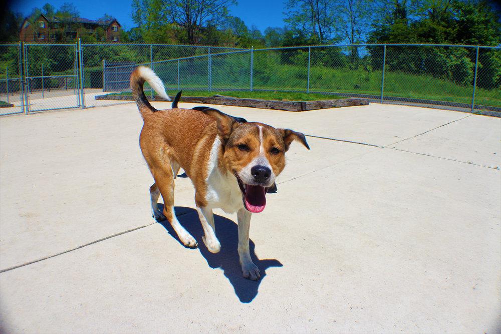 Pet Nation Lodge Daycare Dog Maple 1
