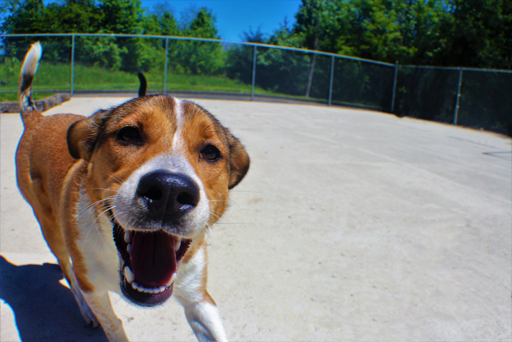 Pet Nation Lodge Boarding Dog Maple 4