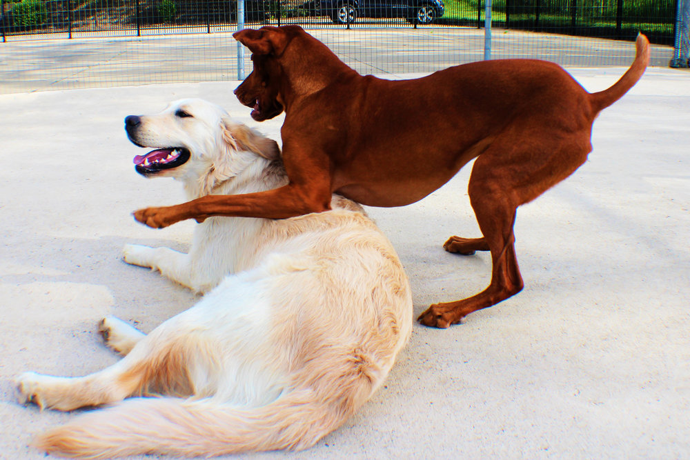 Pet Nation Lodge Boarding Dog Winnie 8
