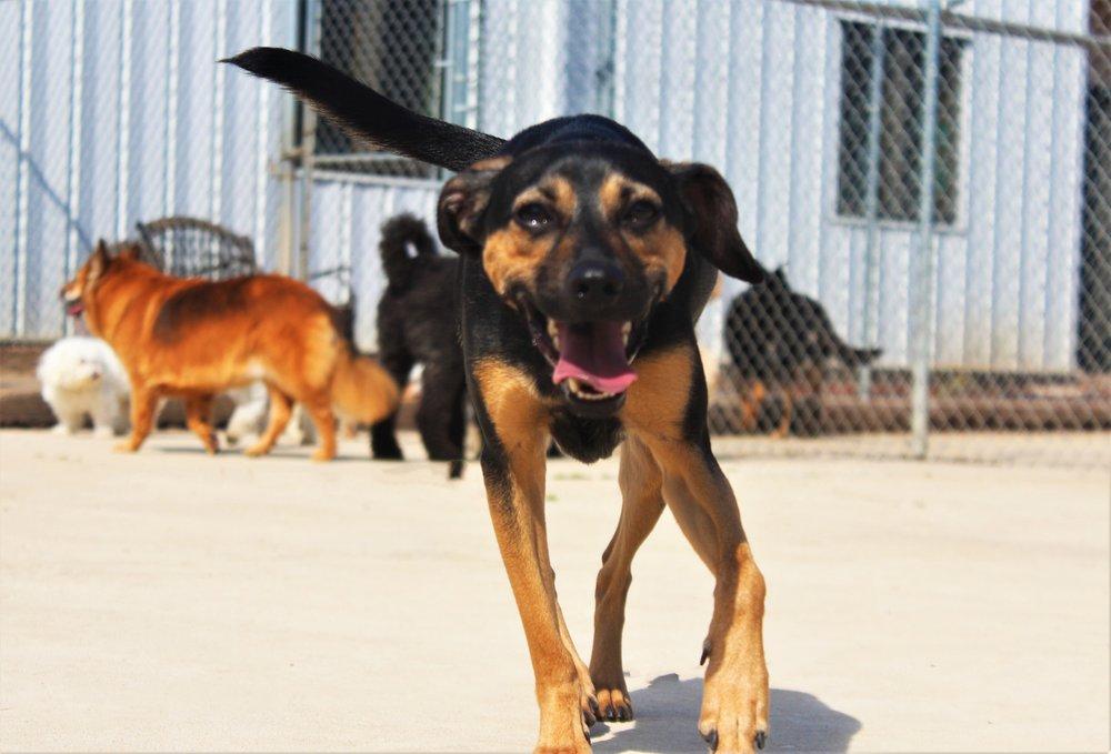 Pet Nation Lodge Dog Elwood