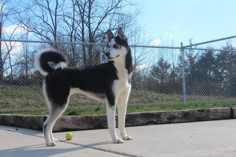 Pet Nation Lodge Dog Killian