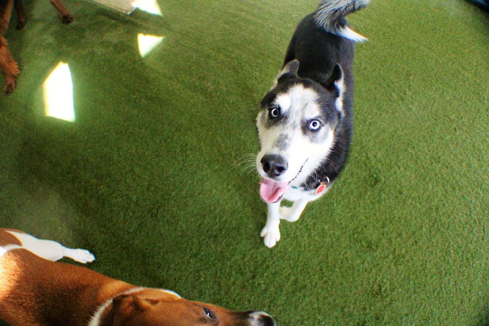 Pet Nation Lodge Daycare Dog Killian 6