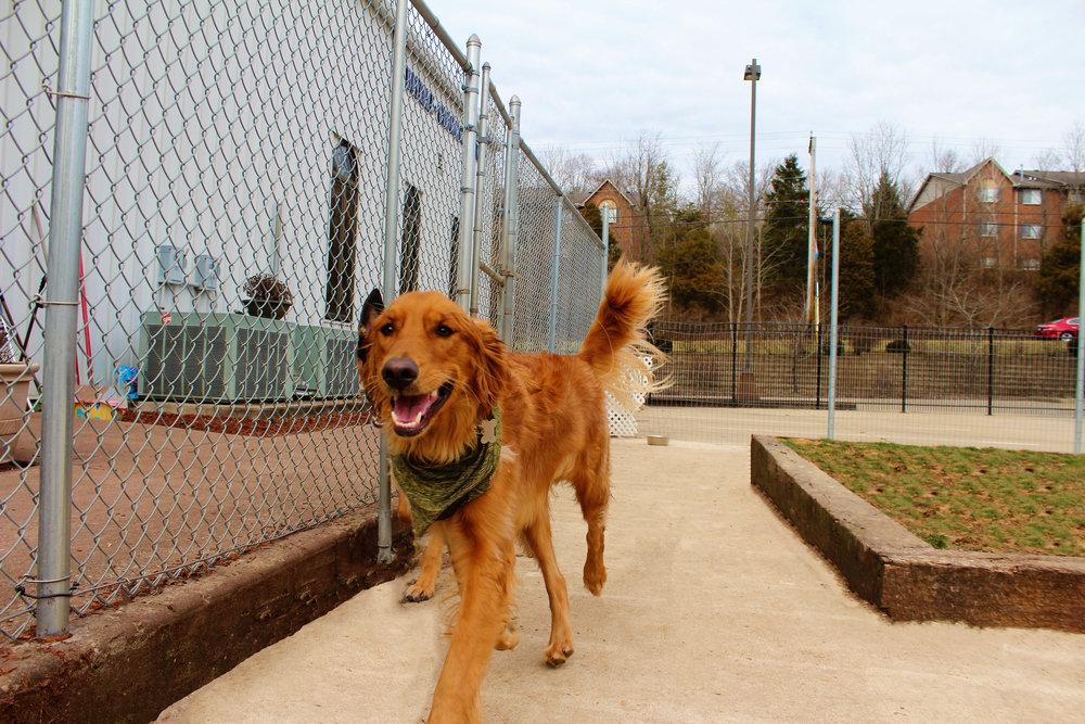 Pet Nation Lodge Boarding Dog Kobe 8