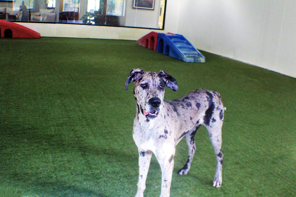 Pet Nation Lodge Daycare Dog Moondust 7