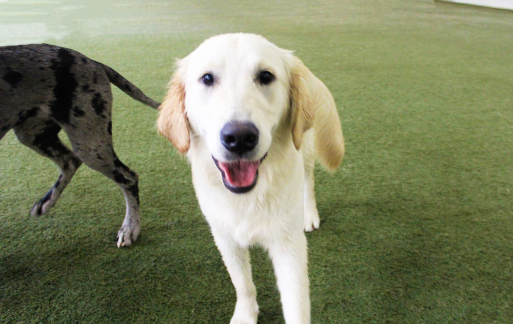 Pet Nation Lodge Daycare Dog Winnie 9
