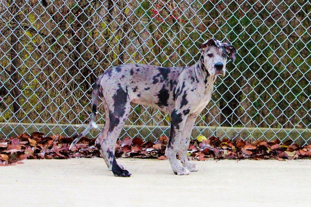 Pet Nation Lodge Dog Moondust