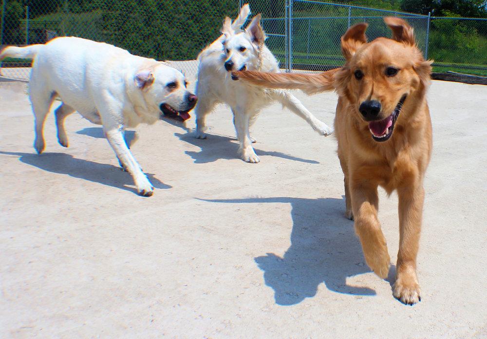 Pet Nation Lodge Daycare Dog Gorden 6