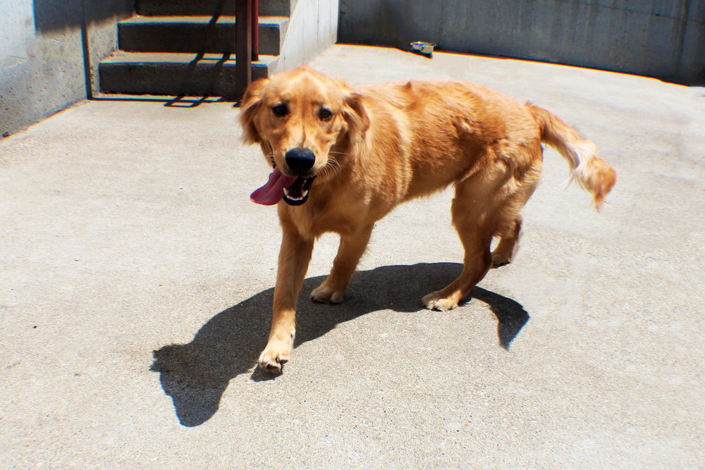 Pet Nation Lodge Boarding Dog Gorden 7