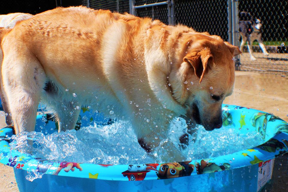 Pet Nation Lodge Dog Chester