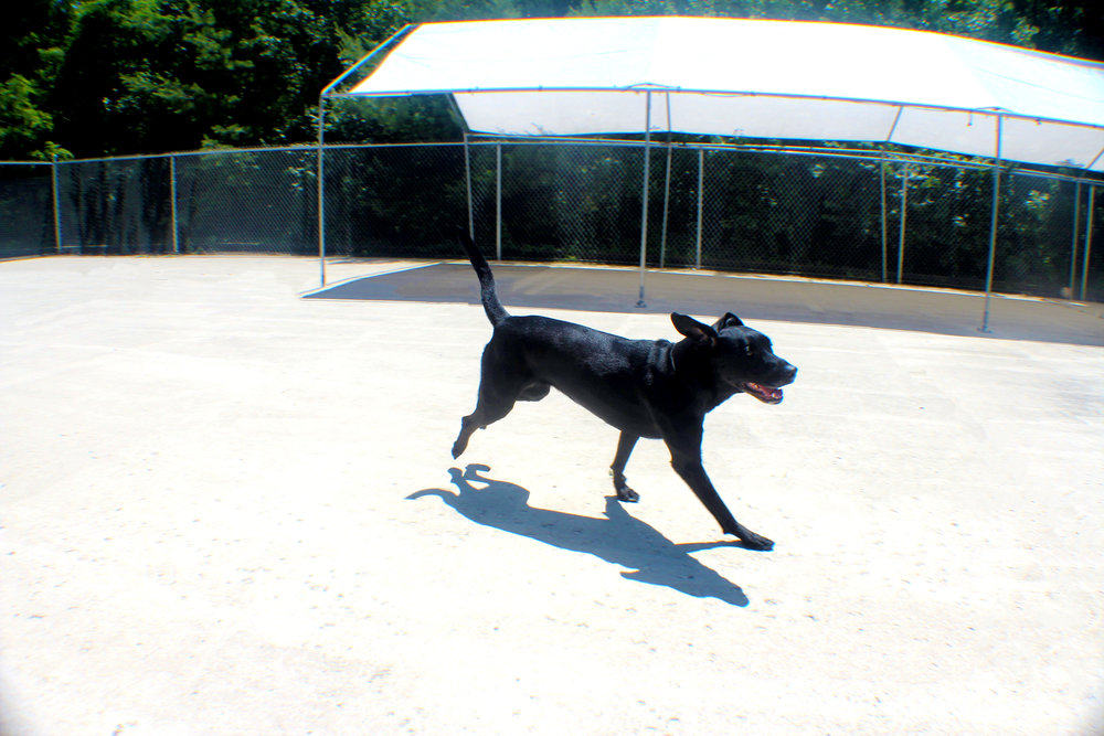 Pet Nation Lodge Daycare Dog Bella 4