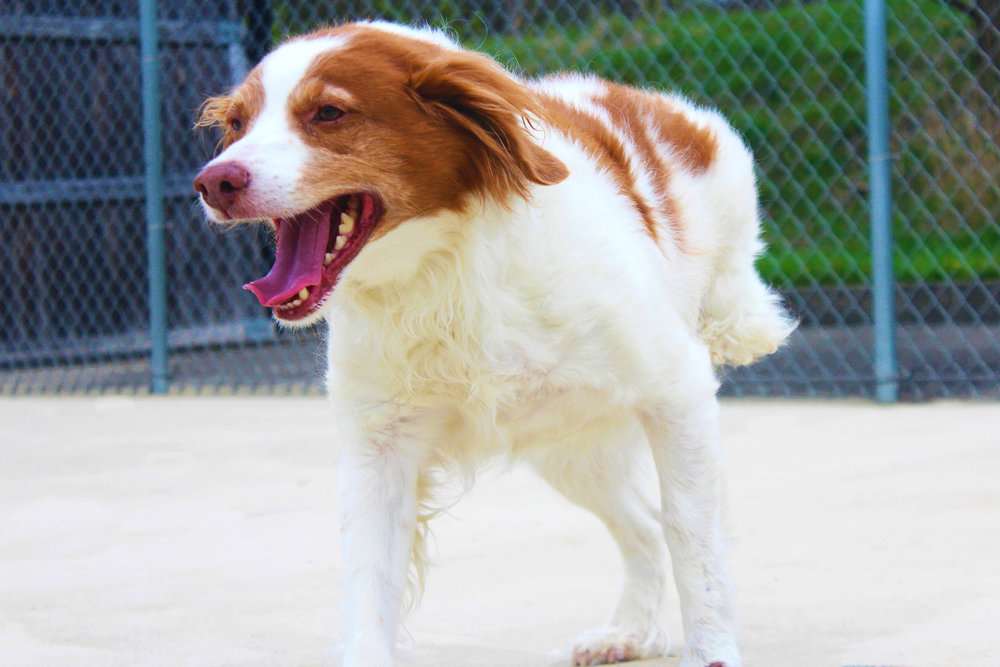Pet Nation Lodge Dog Ruby