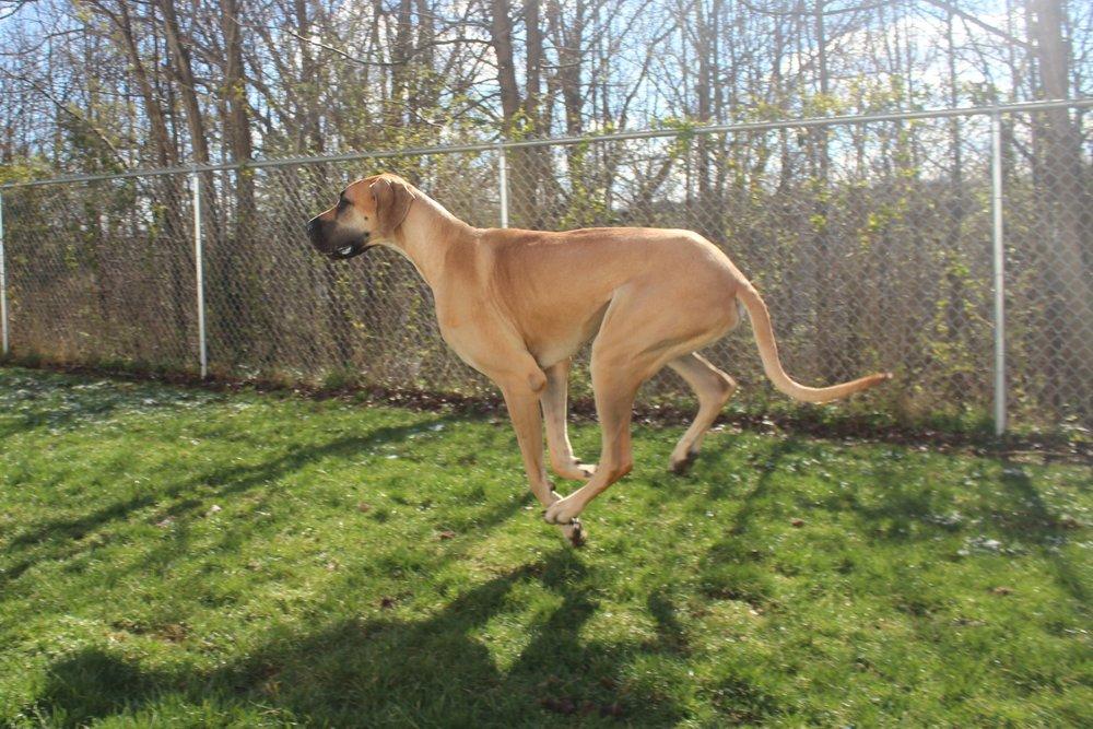 Pet Nation Lodge Dog Rigby