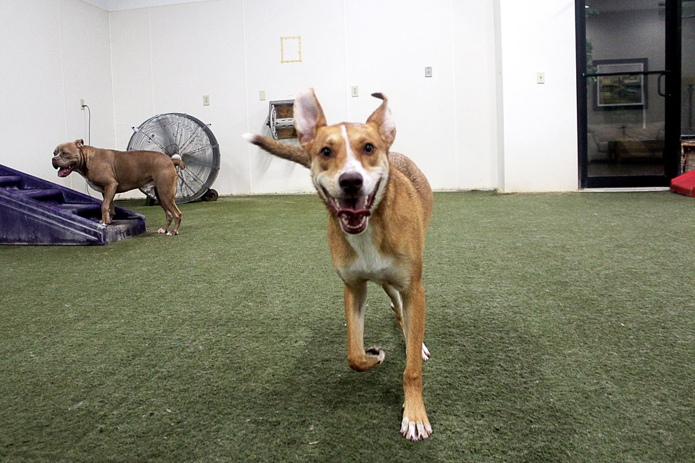 Maddie is always upbeat.  When you're around her she's always happy to see you.  Mostly though she likes to run around and have fun.  Don't we all.