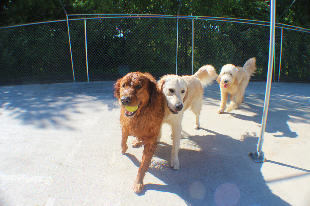 Tucker Lee and friends (that would be a pretty good show to watch) are always happy to be around each other here at Pet Nation Lodge.  These dogs will play and play until the sun goes down.  Always happy and always fun to watch!
