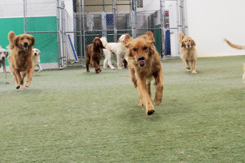 Pet Nation Lodge Daycare Dog Kobe 9
