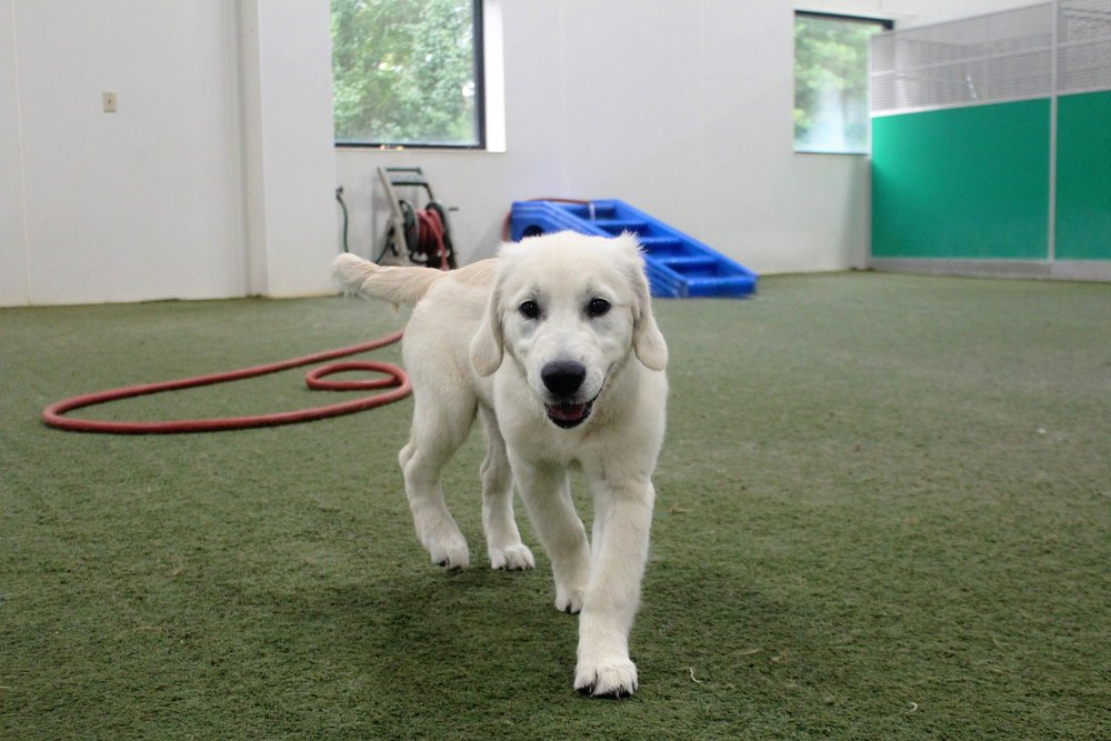 Rufo loves everything, and always has a smile on his face. Even the way he walks you can tell that a happy dog is about to turn the corner. Pet Nation Lodge is very lucky to have a dog like Rufo.
