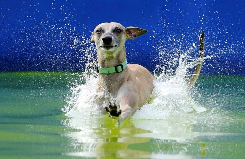 HOME OF THE TRI-STATE DOCK DIVING CLUB - Swimming Fun For Any Dog - Any Age - Any Owner