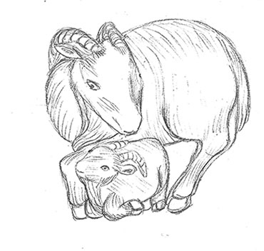 Goat with Kid - sketch from the British Museum